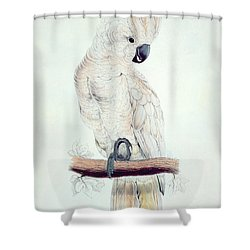 Salmon Crested Cockatoo Shower Curtain by Edward Lear