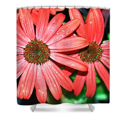 Salmon Daisy Shower Curtain by Aimee L Maher Photography and Art Visit ALMGallerydotcom
