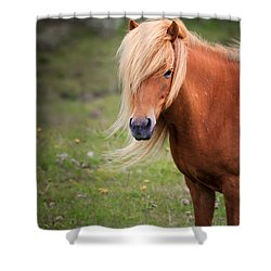 Shower Curtain featuring the photograph Salon Perfect Pony by Peta Thames