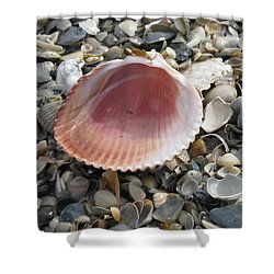 Salt Water Cockle Shower Curtain