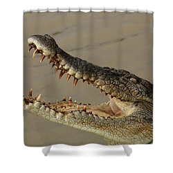 Salt Water Crocodile 1 Shower Curtain by Bob Christopher
