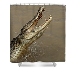 Salt Water Crocodile Australia Shower Curtain by Bob Christopher