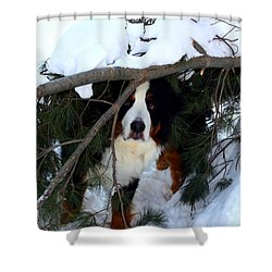 Sam And His Fort Shower Curtain by Patti Whitten