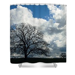 Same Tree Many Skies 13 Shower Curtain