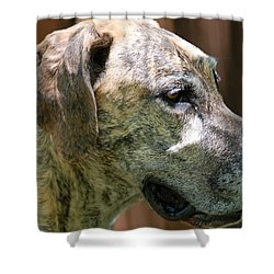 Shower Curtain featuring the photograph Sammy by Aimee L Maher Photography and Art Visit ALMGallerydotcom