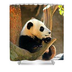 San Diego Zoo Panda Bear Xiao Liwu Shower Curtain