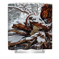 Shower Curtain featuring the photograph San Jacinto Fallen Tree by Kyle Hanson