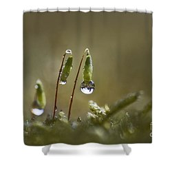 Sanctuary Of Light Shower Curtain by Maria Ismanah Schulze-Vorberg