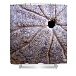 Sand Dollar 2 Shower Curtain by Vicki Maheu
