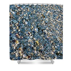 Shower Curtain featuring the photograph Sand Key Shells by David Nicholls