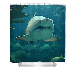 Shower Curtain featuring the photograph Sand Shark by Robert Meanor