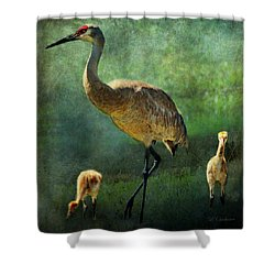 Sandhill And Chicks Shower Curtain