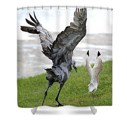 Sandhill Chasing Ibis Shower Curtain by Carol Groenen