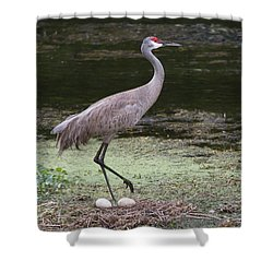 Shower Curtain featuring the photograph Sandhill Crane And Eggs by Paul Rebmann