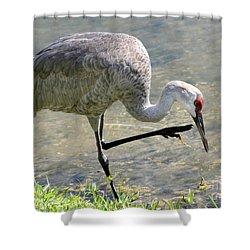 Sandhill Crane Balancing On One Leg Shower Curtain by Sabrina L Ryan