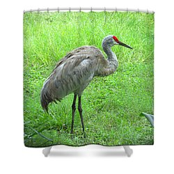 Shower Curtain featuring the photograph Sandhill Crane - Bird Photography by Ella Kaye Dickey