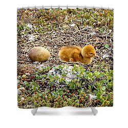 Sandhill Crane Chick Shower Curtain by Steven Ralser