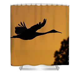 Sandhill Crane In Flight Shower Curtain