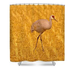 Sandhill Crane  Shower Curtain by Jeff Swan