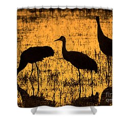 Sandhill Crane Silhouette Shower Curtain