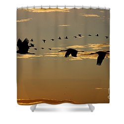 Sandhill Cranes At Sunset Shower Curtain