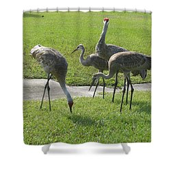 Sandhill Cranes Family Shower Curtain by Zina Stromberg