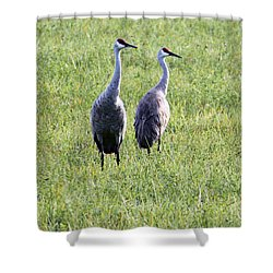 Shower Curtain featuring the photograph Sandhill Cranes In Wisconsin by Debbie Hart