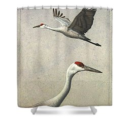 Sandhill Cranes Shower Curtain by James W Johnson