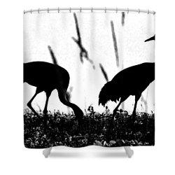 Sandhill Cranes In Silhouette Shower Curtain