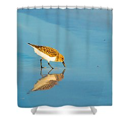 Sandpiper Mirror Shower Curtain