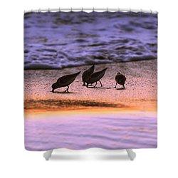 Sandpiper Morning Shower Curtain
