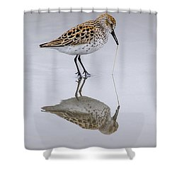Sandpiper Pull Shower Curtain by Sonya Lang