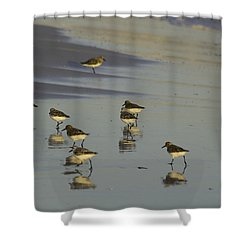 Sandpiper Sunset Reflection Shower Curtain