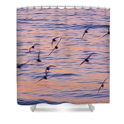 Sandpipers At Sunset Shower Curtain by John Wartman