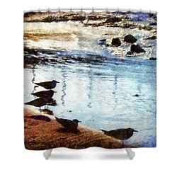 Sandpipers At The Shore Shower Curtain by Janine Riley