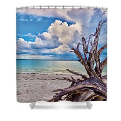 Sanibel Island Driftwood Shower Curtain by Timothy Lowry