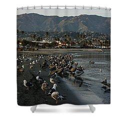 Shower Curtain featuring the photograph Santa Barbara Beach Crowd  by Georgia Mizuleva