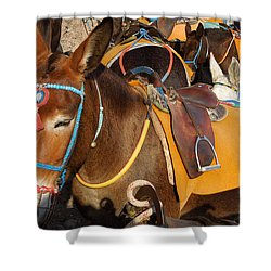 Santorini Donkeys Ready For Work Shower Curtain by Colette V Hera  Guggenheim