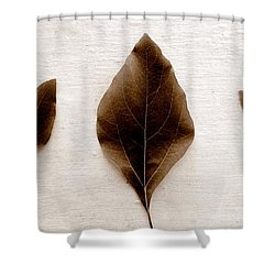Sassafras Leaves In Sepia Shower Curtain by Michelle Calkins