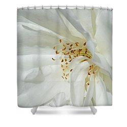 Satin Sheets Shower Curtain by Steve Taylor