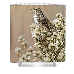 Shower Curtain featuring the photograph Savannah Sparrow by Bryan Keil