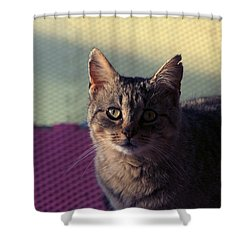 Saw Tooth Shower Curtain