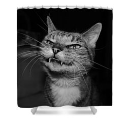 Say Cheese Shower Curtain by Catie Canetti