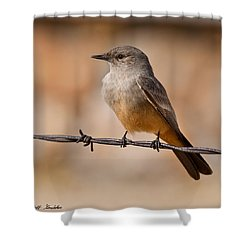 Say's Phoebe On A Barbed Wire Shower Curtain
