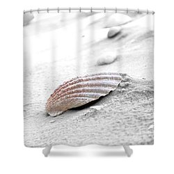 Shower Curtain featuring the photograph Scallop Shell by Robert Meanor