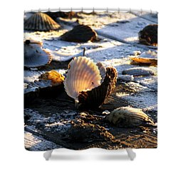 Half Shell On Ice Shower Curtain by Karen Wiles