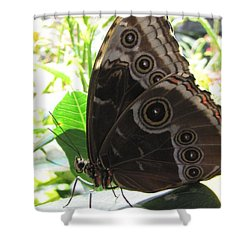 Scarce Morpho Shower Curtain