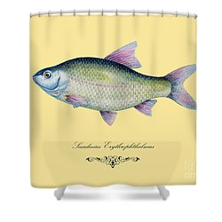 Scardinius Erythrophthalmus Shower Curtain