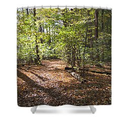 Scared Grove 2 Shower Curtain by William Norton