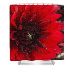 Scarlet Dahlia Shower Curtain by Janice Rae Pariza